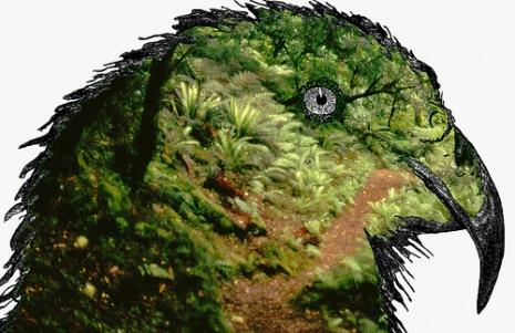 """A Kea (Via <a href=""""http://bit.ly/rq44cC"""">Martin Thum</a>.)"""